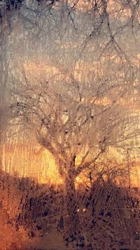 Sunrise through frosted glass